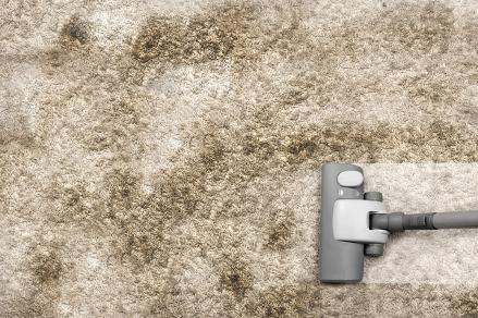 rug cleaning bloomington il